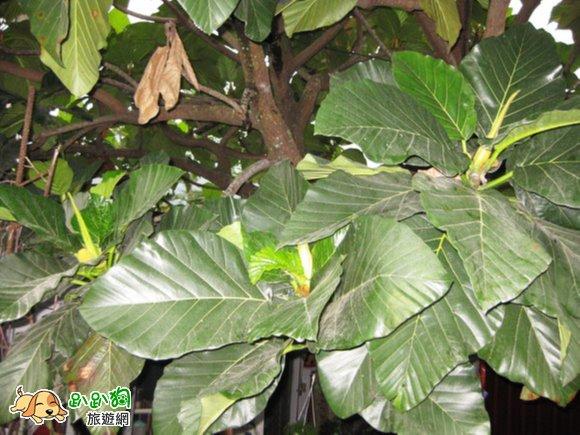 背景 壁纸 绿色 绿叶 树叶 植物 桌面 580_435